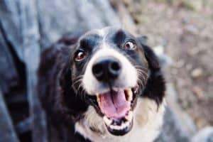 Australian Pet Treats Company