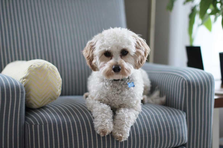 Healthy Dog Treats Online in Australia