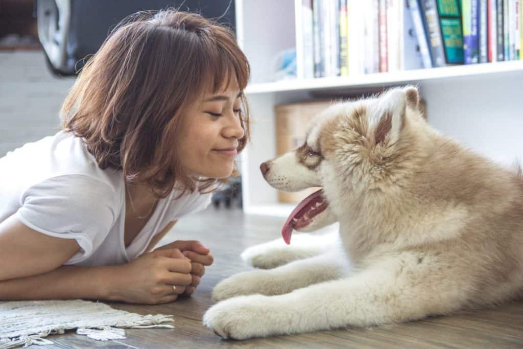 Natural Australian Dog Treats Online