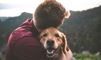 The Best Treats to Clean Dog Teeth