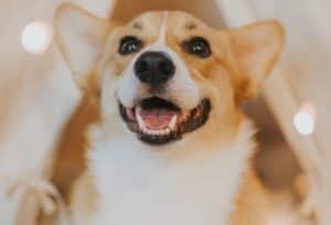 The Best Rewards for Dog Training