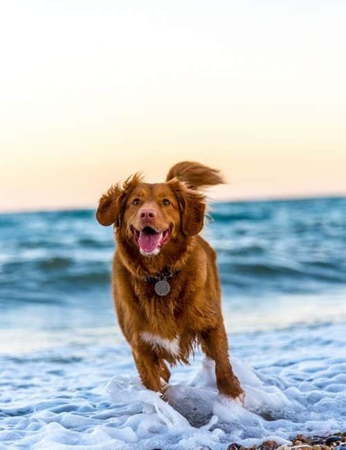 What Is a Positive Reward For My Dog?