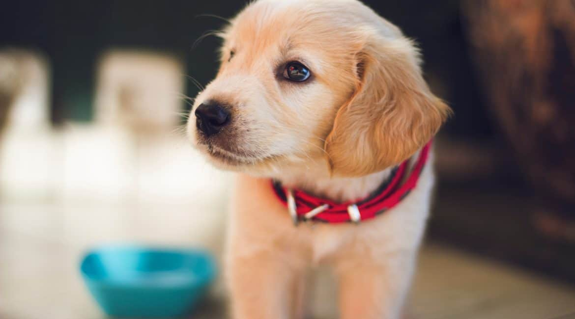 What Training Treats Are Best for a Puppy?