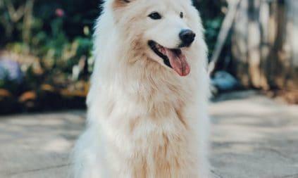 Single Ingredient Dog Treats