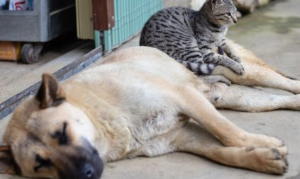 Arthritis in Dogs & Cats
