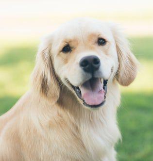 The Best Low Fat Pet Treats in Australia