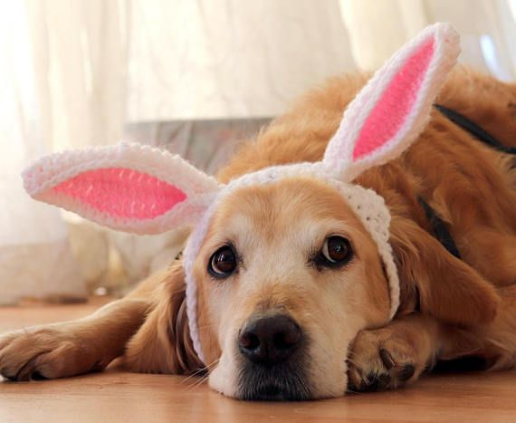 Involve your dog in Easter Fun