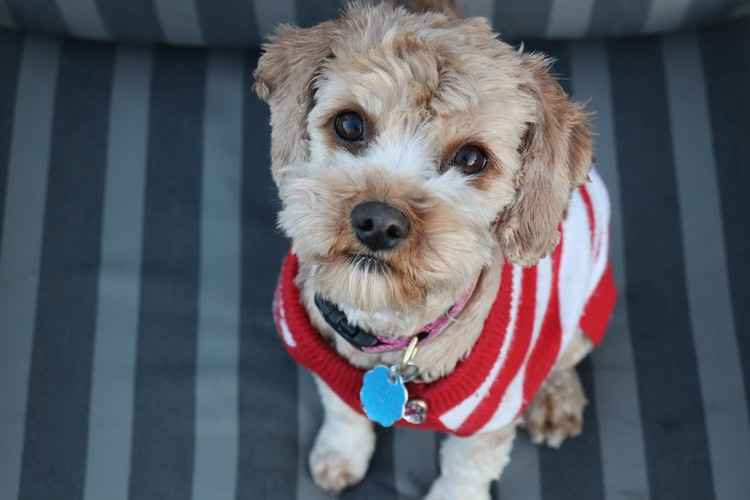 Keep your pet happy & healthy this winter